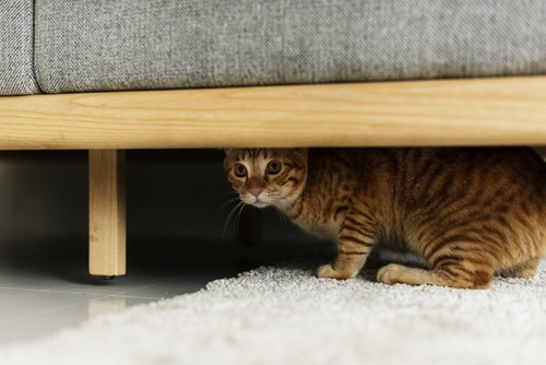ソファの下に隠れる猫