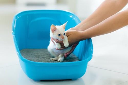 抱っこされてトイレに連れてこられた子猫
