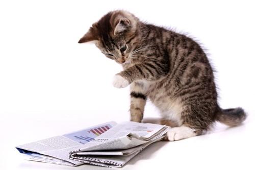 前足で新聞を触る子猫の写真