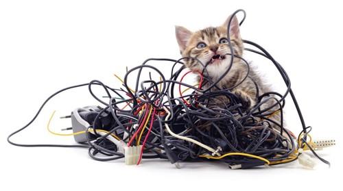山ほどのコードと子猫