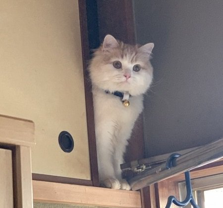 押し入れに居る猫