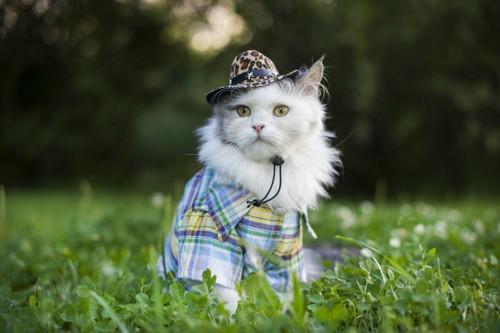 草の中で帽子と服を身に着けた猫