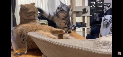 猫パンチされる猫