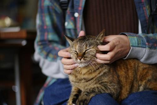 飼い主の膝の上に乗って撫でられている猫