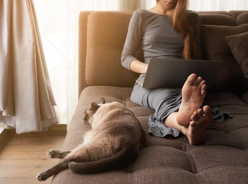 ソファーでパソコンを見る人とくつろぐ猫