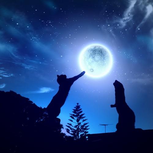 満月で遊ぶ猫