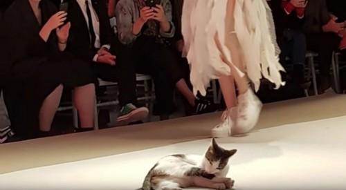 キャットウォークでくつろぐ猫
