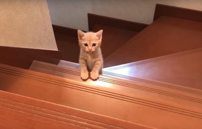 階段の上を見つめる猫
