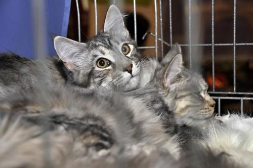 檻の中の親子の猫