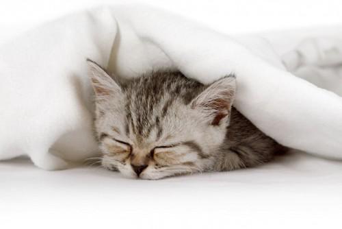 ぐっすり寝る子猫