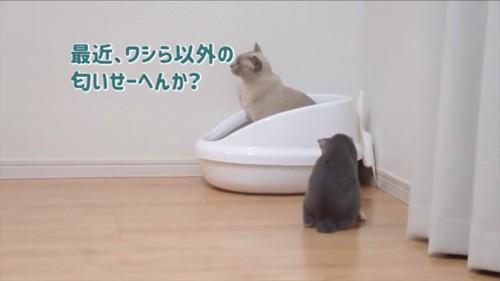 他の猫の存在を疑う