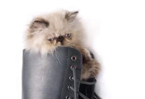 靴の中に入った猫