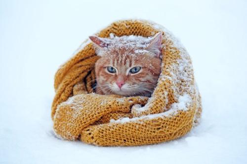 雪の中で丸まる猫
