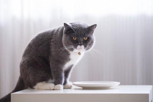 お皿の前でお腹を空かせている猫