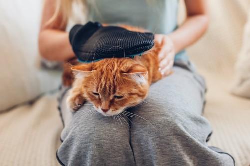 猫を膝の上に乗せてブラッシングしている女性