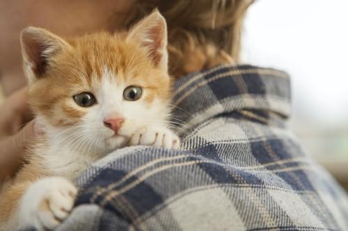 飼い主に抱っこされている子猫