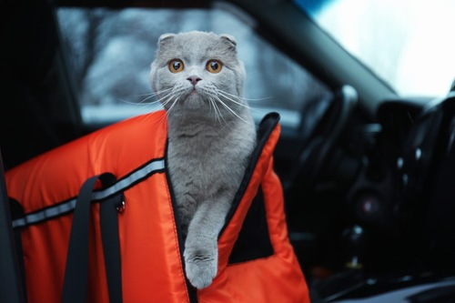 キャリーケースから顔を出す猫