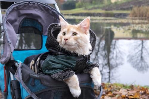 バギーに乗る猫