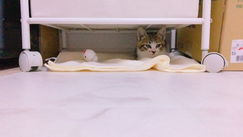 棚の下に隠れるつぼみ