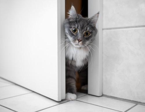 部屋が気になる猫