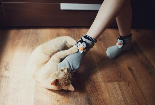 ペンギンの靴下を履く足にじゃれる猫