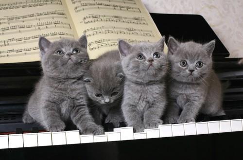 ピアノの上に座る子猫たち