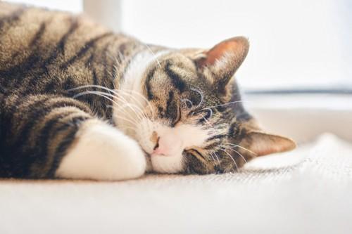 気落ちよく寝る猫