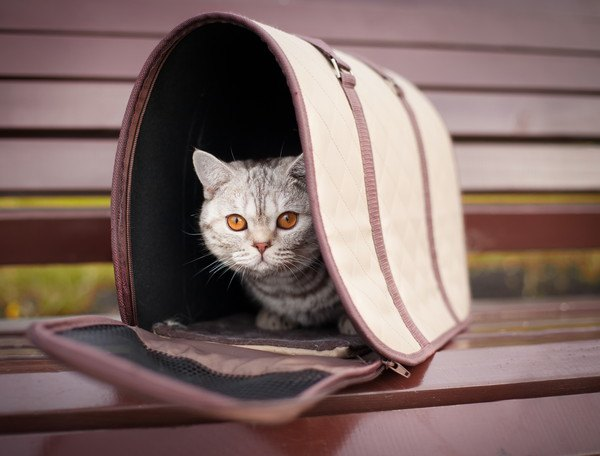 ドーム型のケージと猫