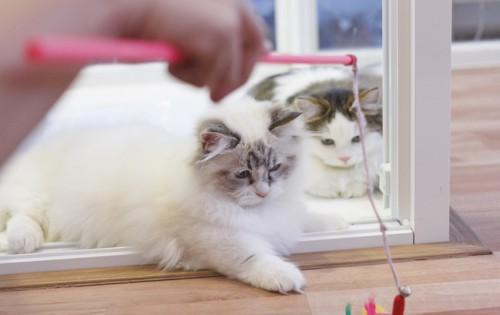 遊んでいる猫たち