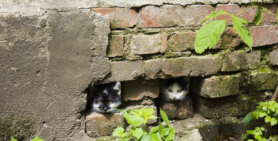 石垣から顔を出す二匹の猫