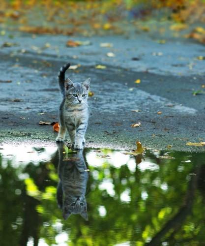 水たまりと猫