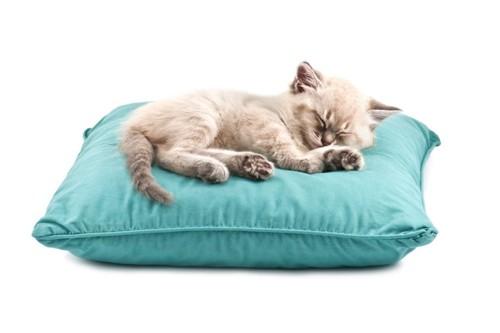 枕の上で寝る子猫