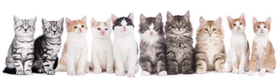 沢山いる猫