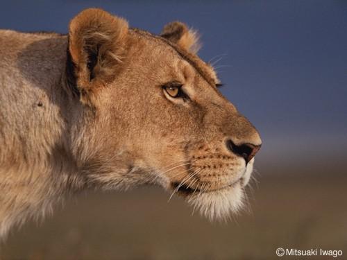 ライオンアップ