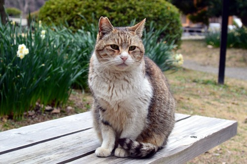 尻尾を足元に巻いてベンチに座る猫