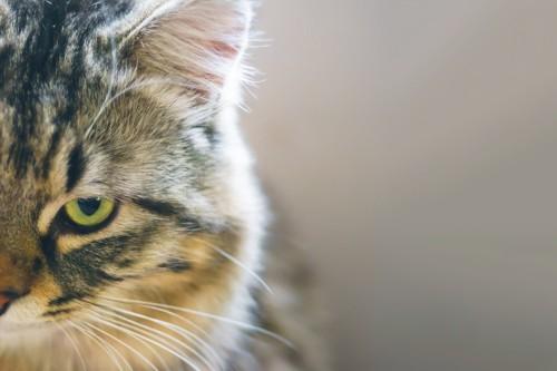 ストレスを感じていそうな猫