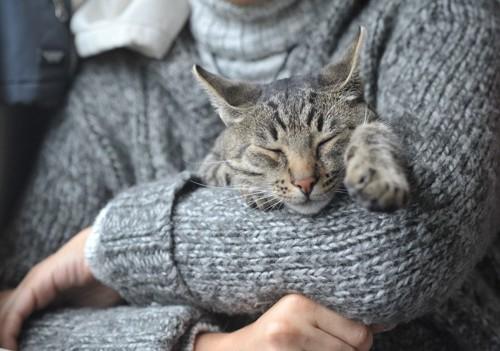 べったりな猫