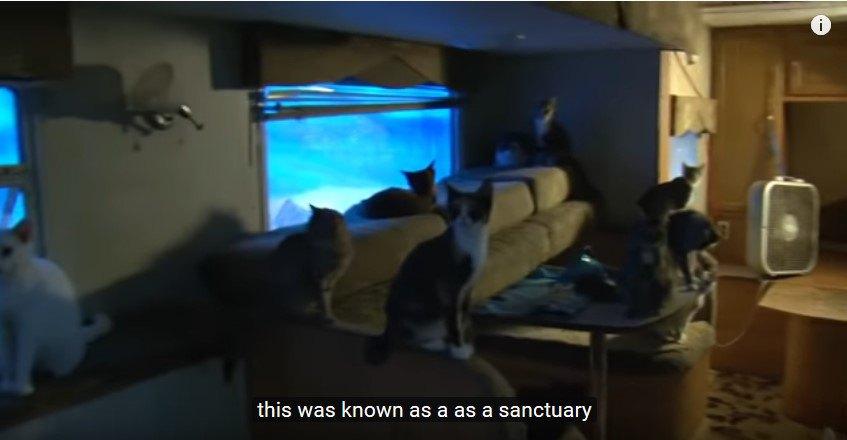 家具の置かれた台所に集められた多くの猫