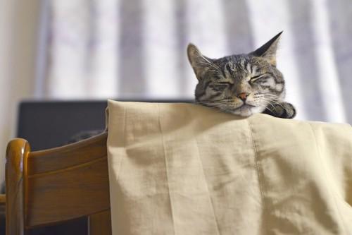 椅子の上に乗って眠る猫