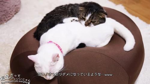 寝ている白猫と黒系の猫