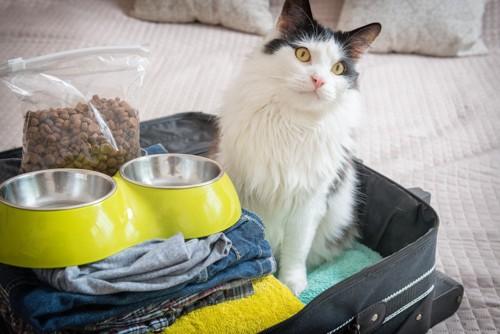 猫の避難袋