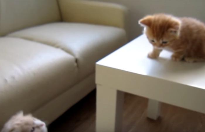 反省中の子猫