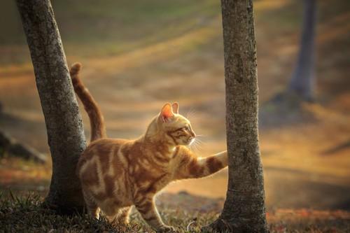 尻尾を立てて木を触る猫