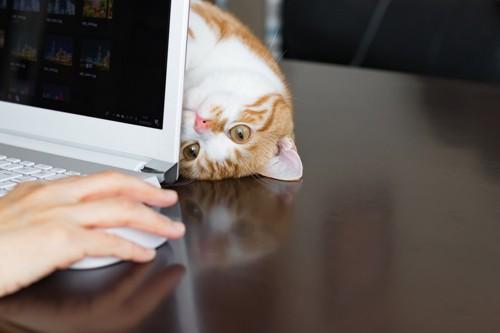 パソコン中にじゃれる猫