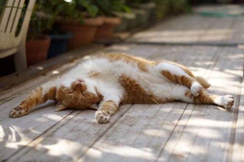 思い切りバンザイをして眠る猫