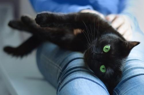 飼い主のひざを枕にする猫