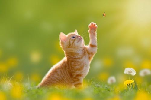 てんとう虫を追う猫