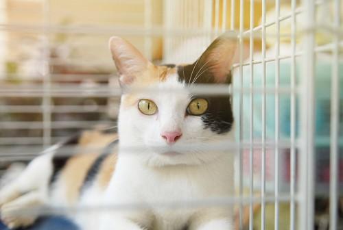 ケージ内で座っている猫