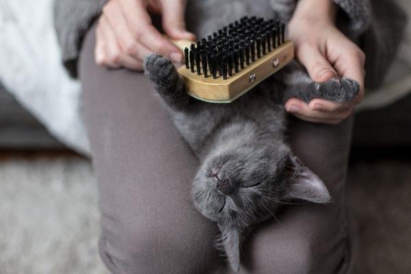 お腹をブラッシング中の猫