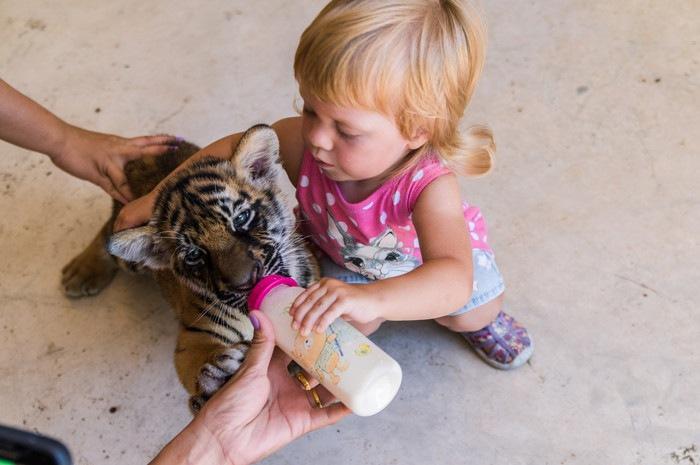 赤ちゃんと虎の子